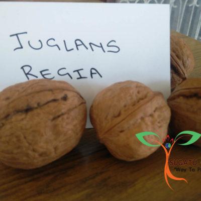JUGLANS REGUA